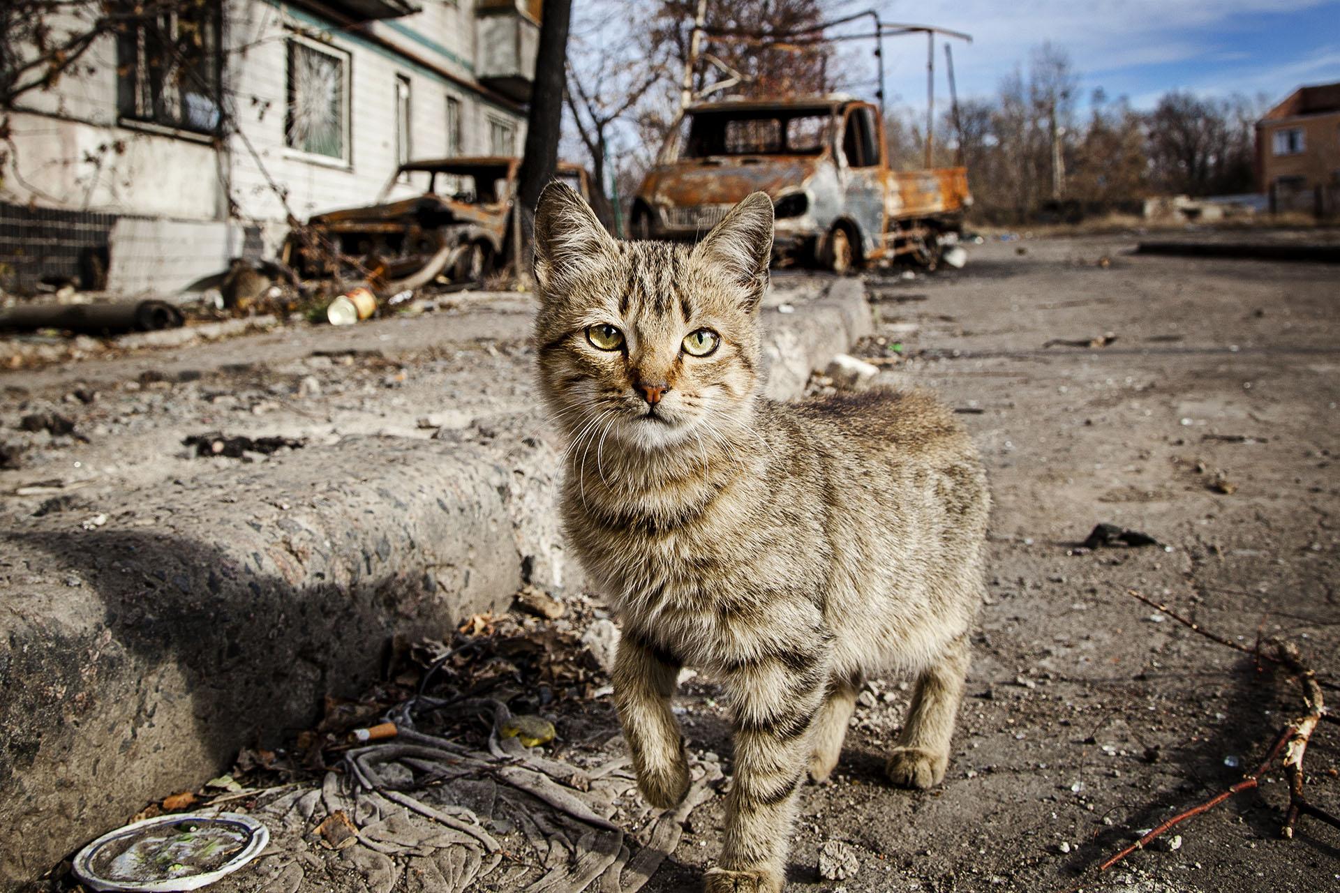 Un gato en un barrio de Donetsk destrozado por los bombardeos de las tropas ucranianas