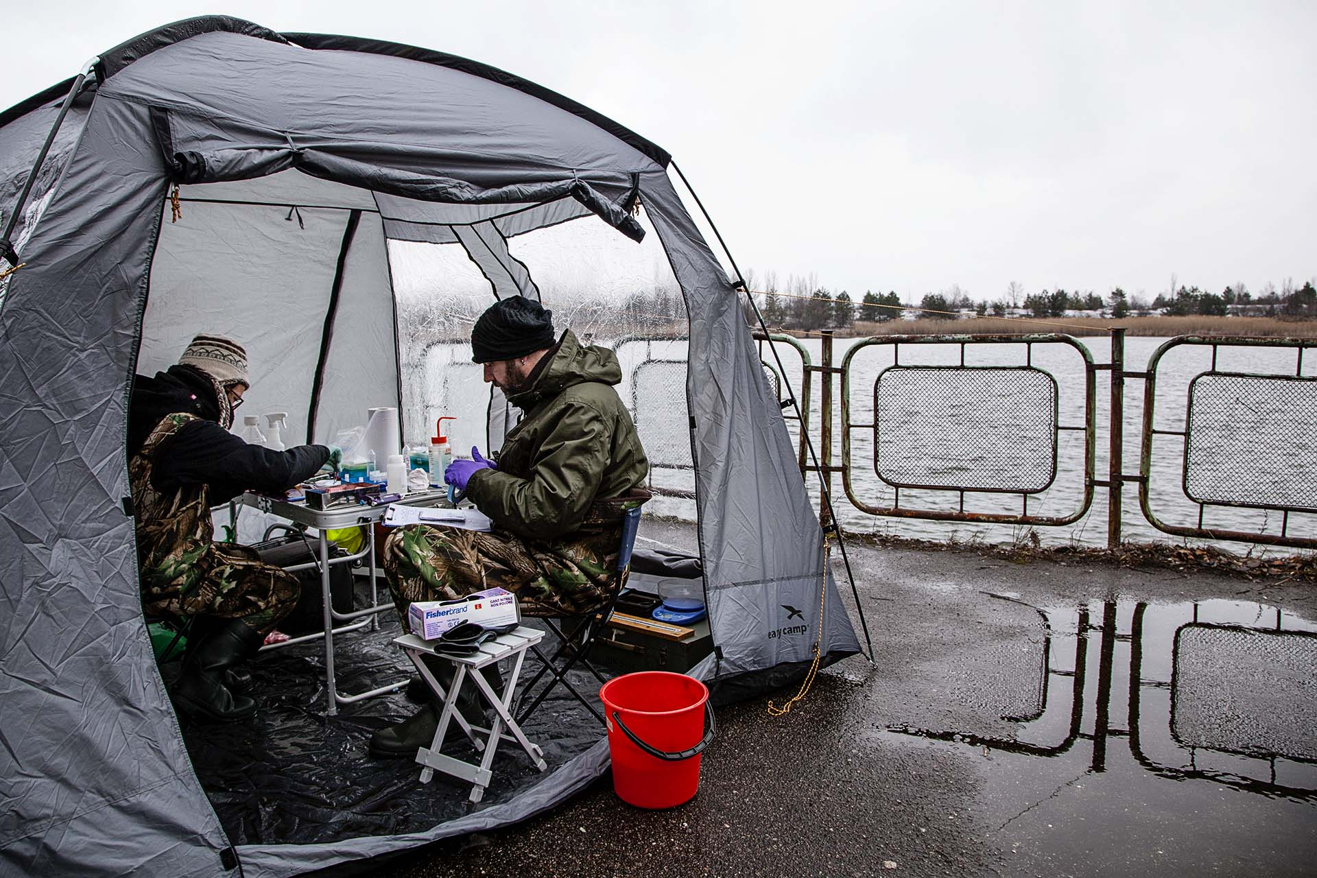 Biólogos ingleses analizan la fauna de un lago próximo a Pripyat.