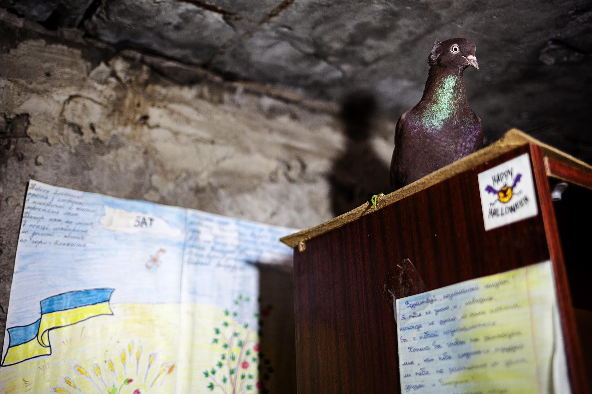 La mascota de un batallón ucraniano en la base temporal en el sótano de una casa en el frente cerca de Avdeevka.